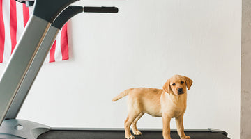 5 Steps to Train Your Dog to Walk on a Treadmill