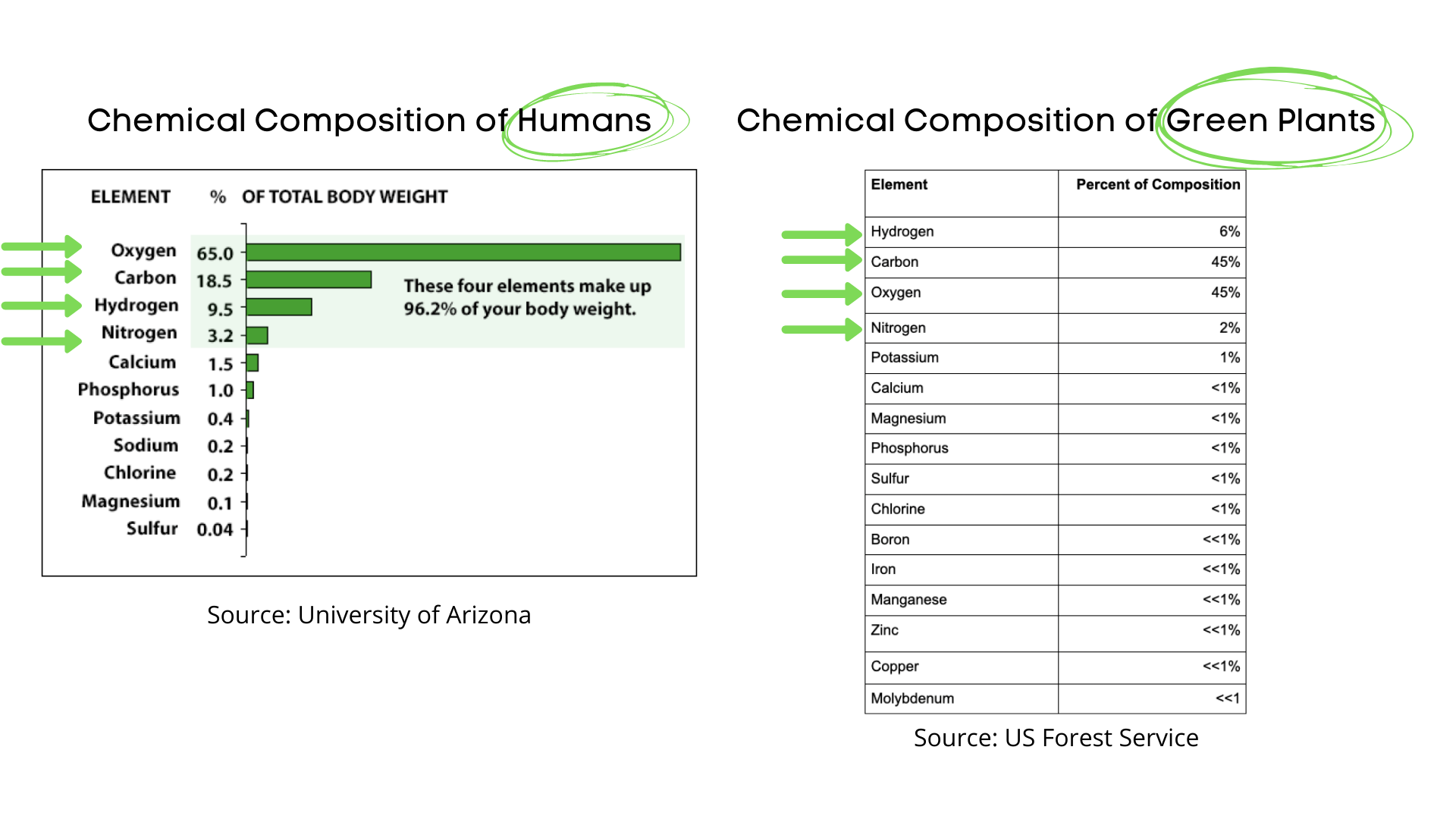 Chemical Composition of Humans and Plants