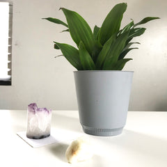 Amethyst Crystal and Plant on Desk