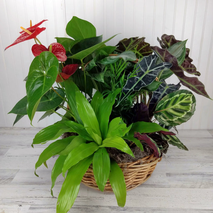 Abundance of plants in a basket