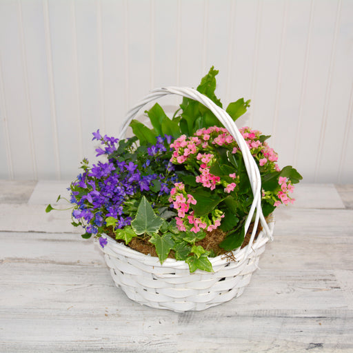 Plant Basket with Flowering