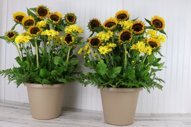 Event Pillars with Sunflowers