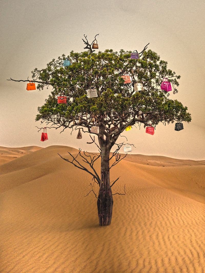 Wishing tree 1 (birkin)