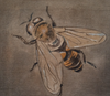 Stefan Mannel Painting Dungfly - Stefan Mannel Painting Dungfly - 5 Pieces Gallery - Contemporary Art & Photography