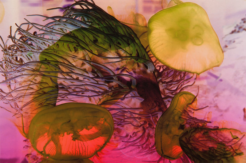 Christina Paetsch Works on paper Anemonenwechsel - Christina Paetsch Works on paper Anemonenwechsel - 5 Pieces Gallery - Contemporary Art & Photography