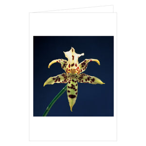 Mapplethorpe Flowers Notecard Box