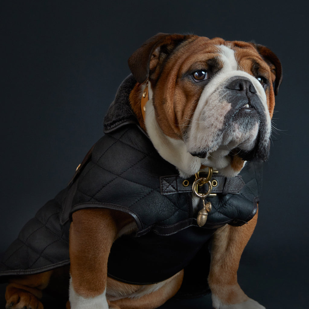The Burlington dog coat