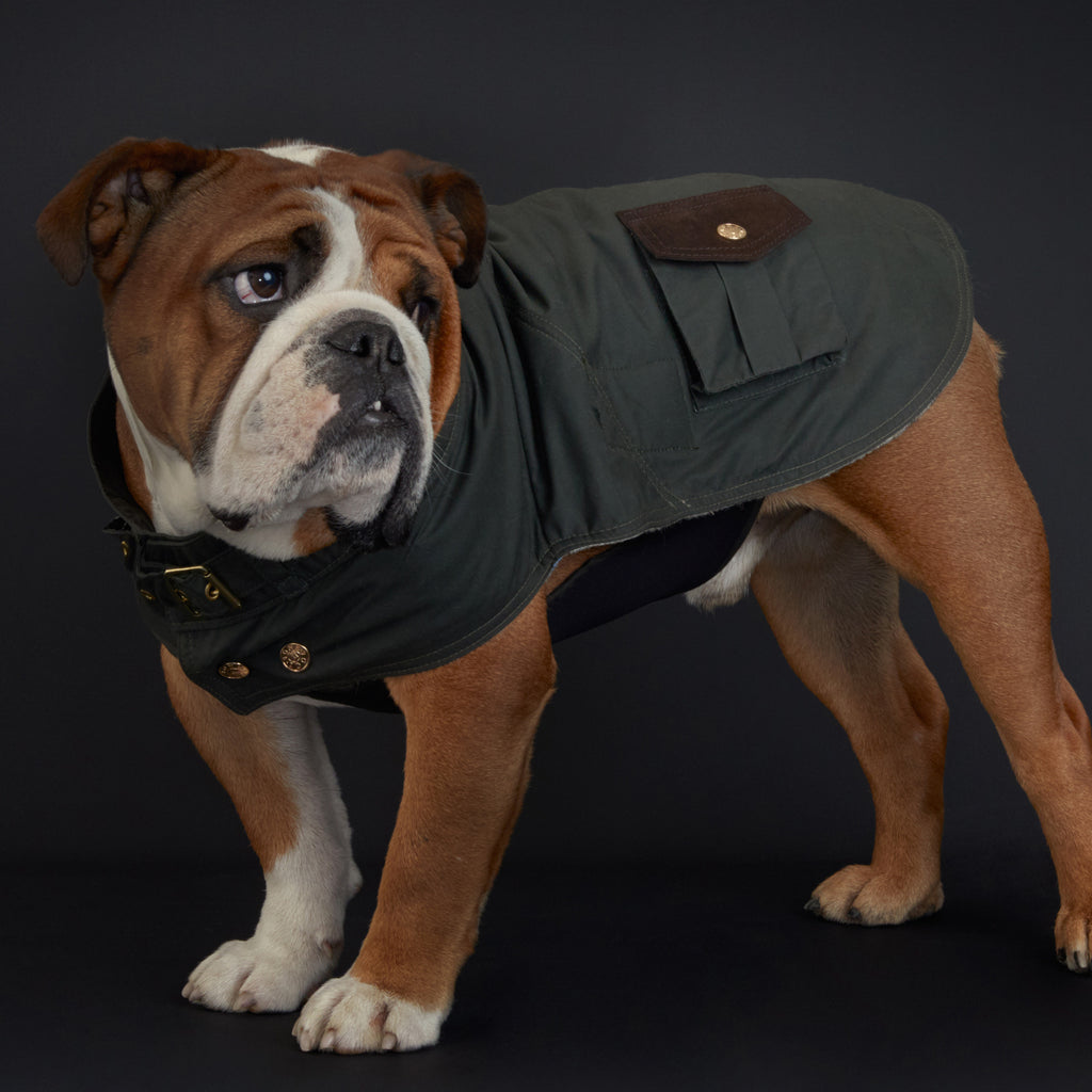 The Greenwich dog coat