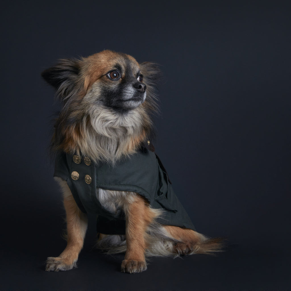 The Clarence dog coat