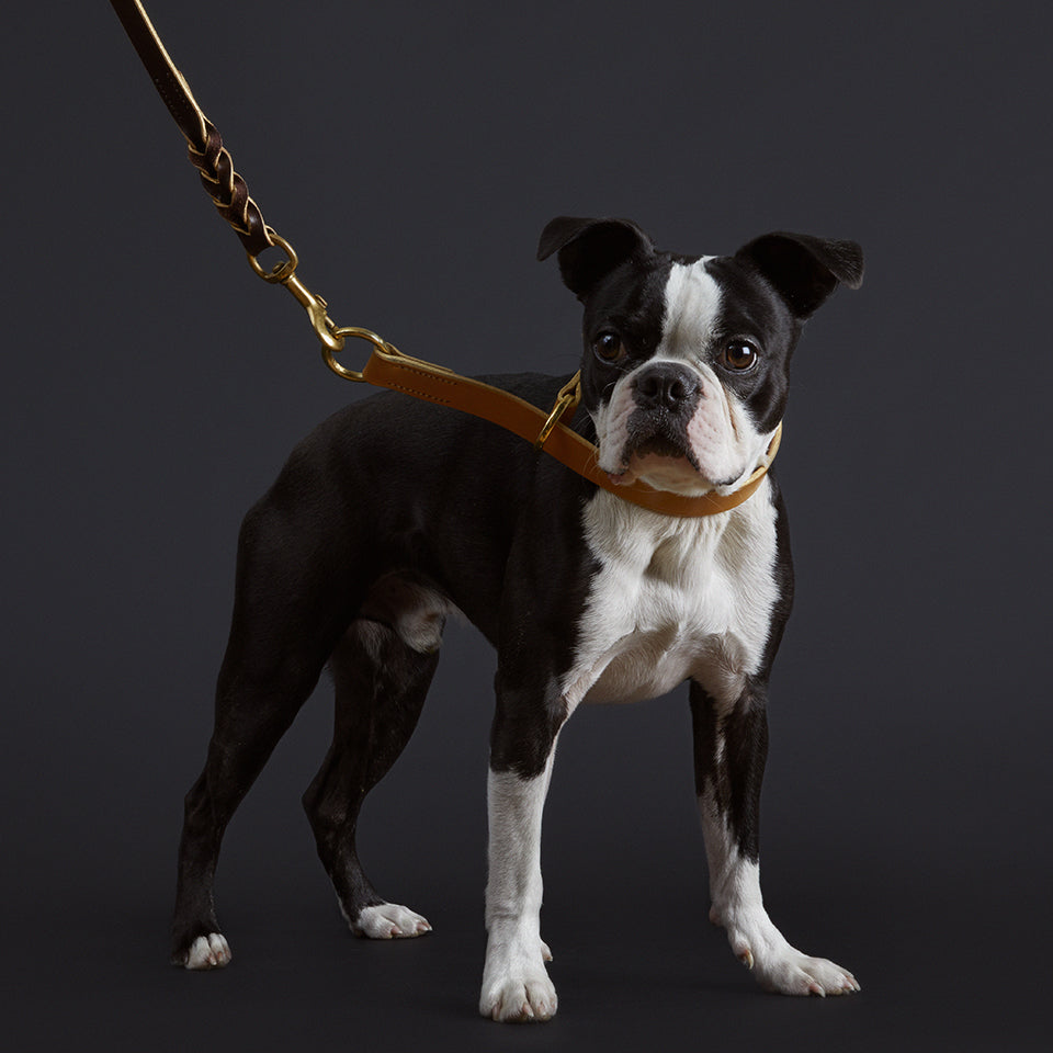 The Albert leather dog lead