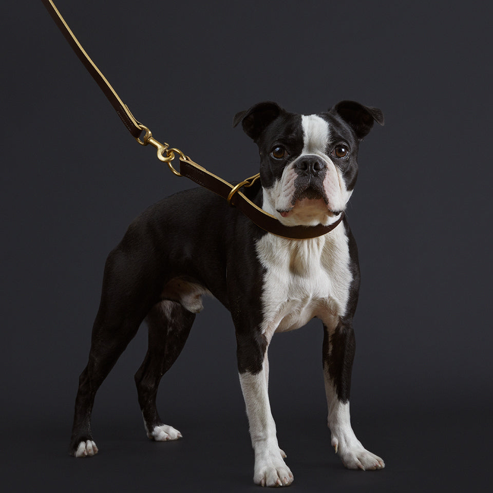 The Brompton leather dog collar