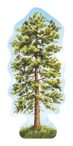 Ponderosa Pine Tree Sticker