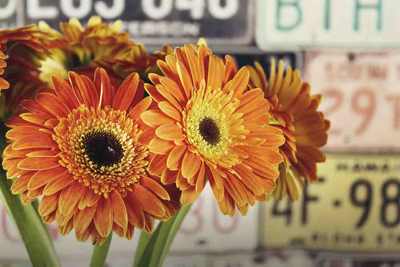 flowers in front of old license plates