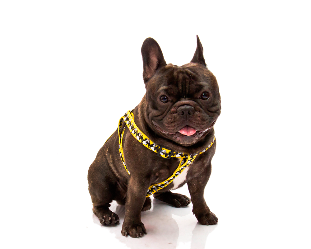 HARNESS SNOOPY CHARLIE BROWN - Zooz Pets