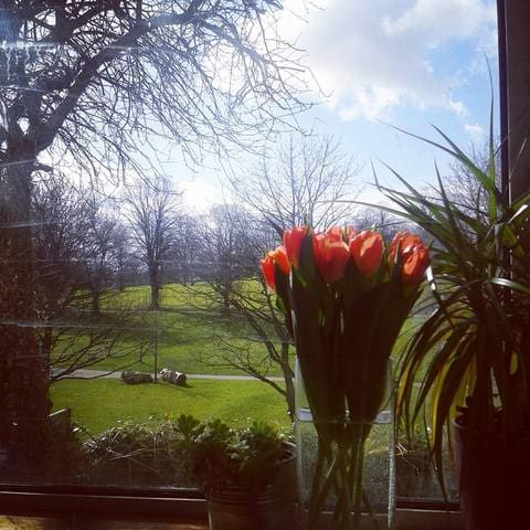 View From My Studio + Tulips