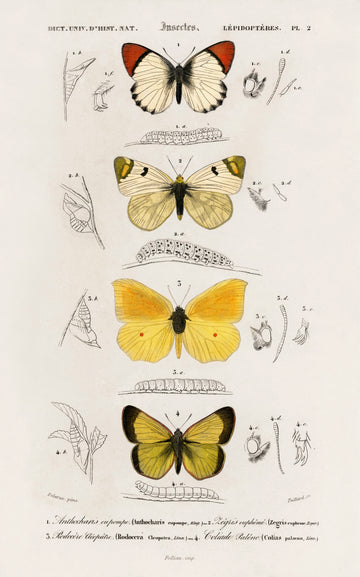 Butterfly Stack - Vintage Print Download