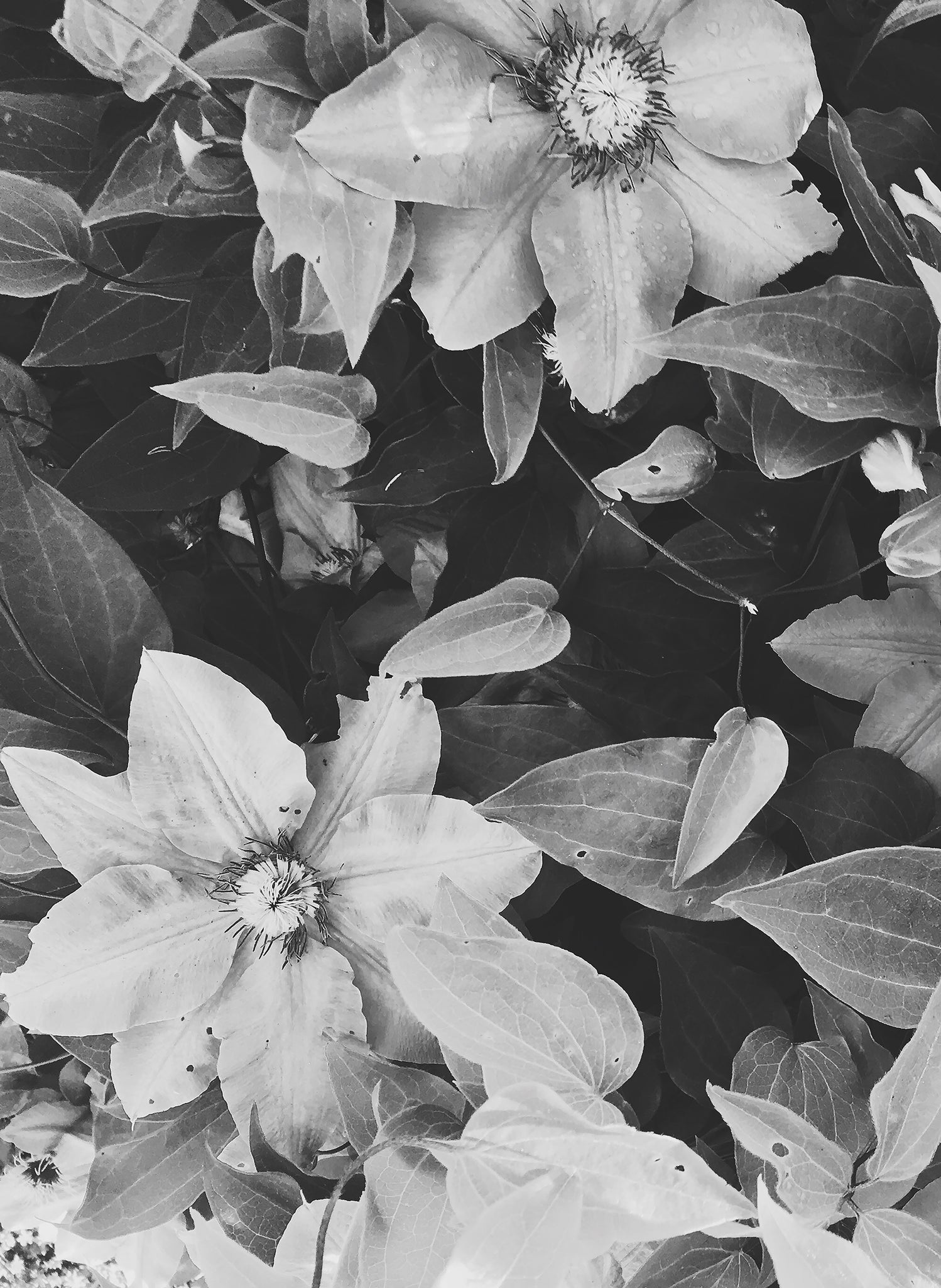 Black And White Floral Print Downloads Set Of 2 In Honor Of Design