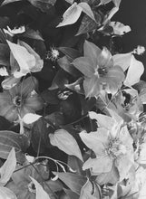 Black and White Floral Print Downloads - (Set of 2)