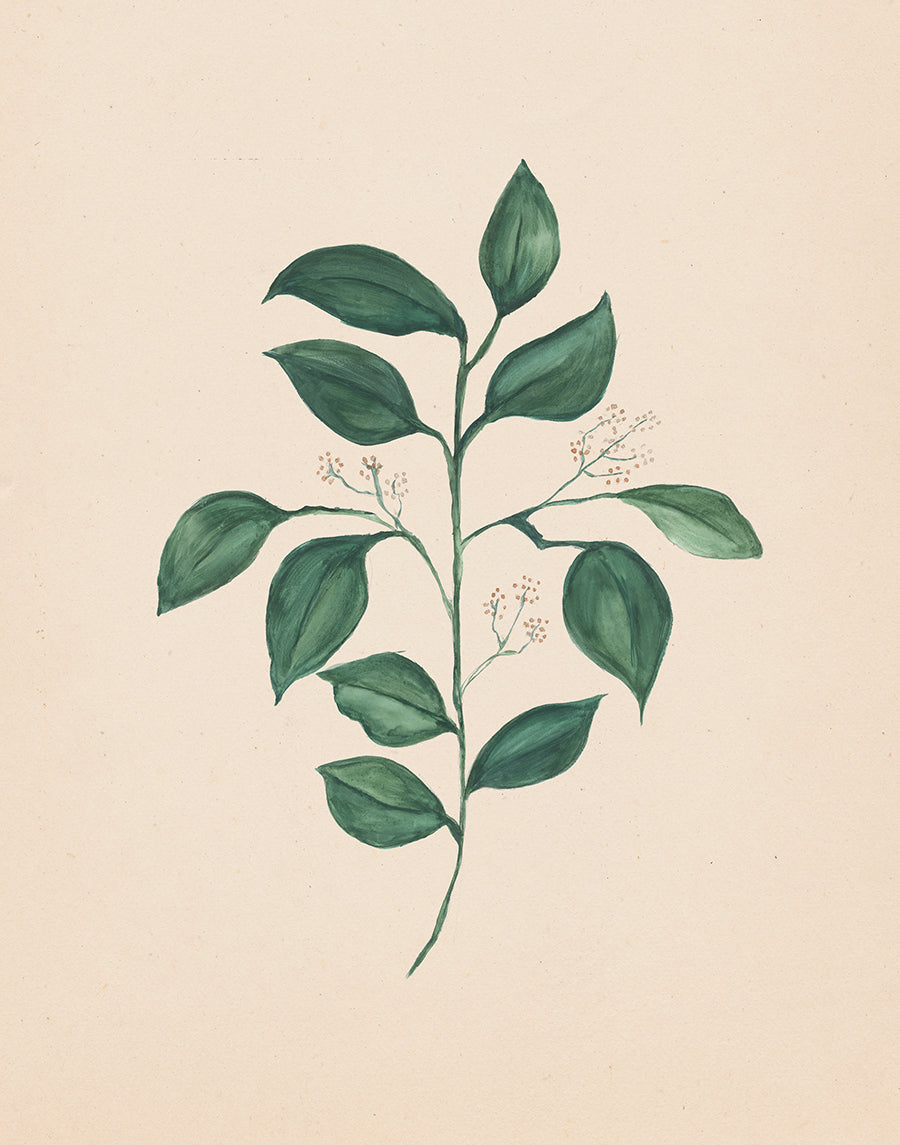 Eucalyptus Watercolor Print Download