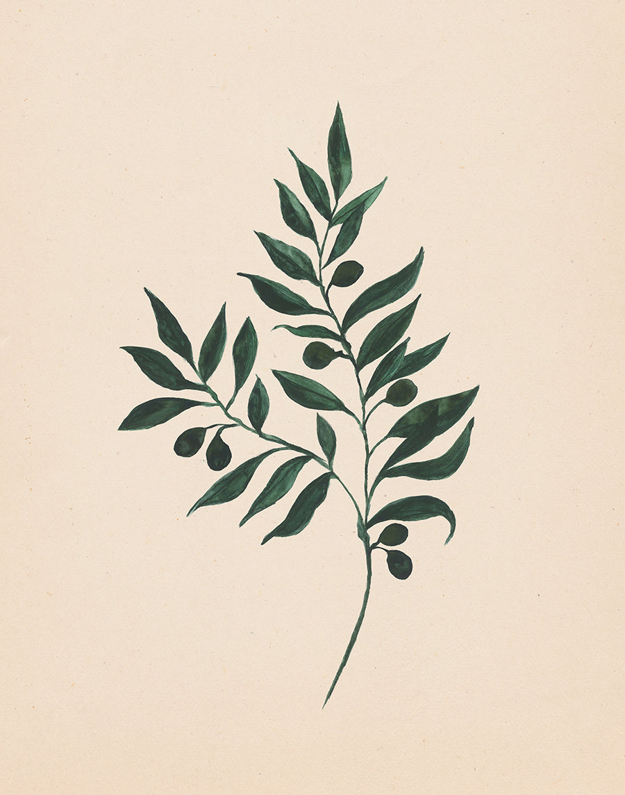 Watercolor Olive Branch Print Download