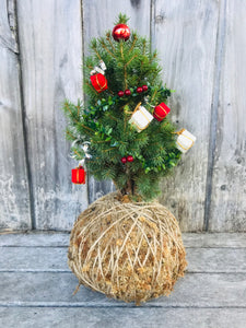 Christmas Tree Kokedama