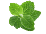 Botanicals Beauty product ingredients peppermint