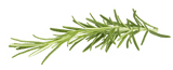Botanicals Beauty product ingredients rosemary