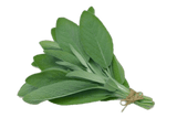 Botanicals Beauty product ingredients sage