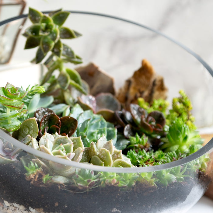 How to: Open Terrarium Maintenance