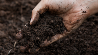 Is Your Soil Healthy?