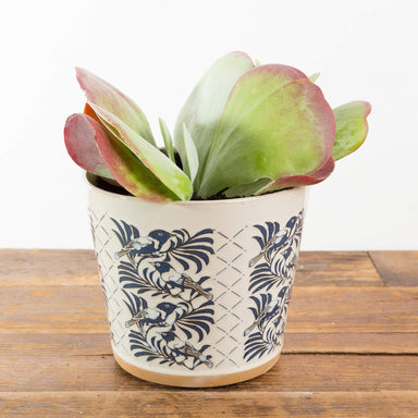 Turlingtong Planter - Urban Sprouts