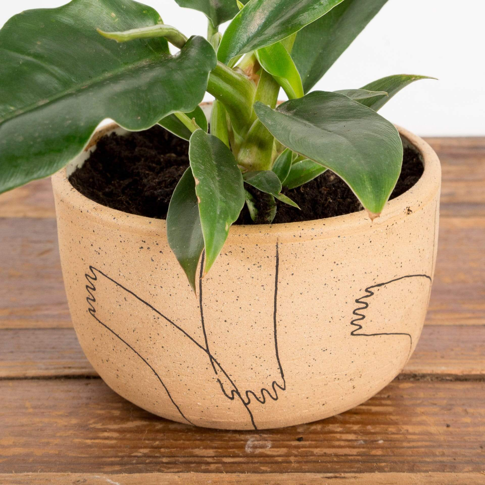 Raw Hands Planter - Urban Sprouts