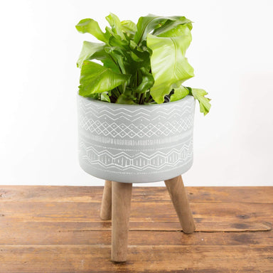 Stilted Dish Planter - Urban Sprouts