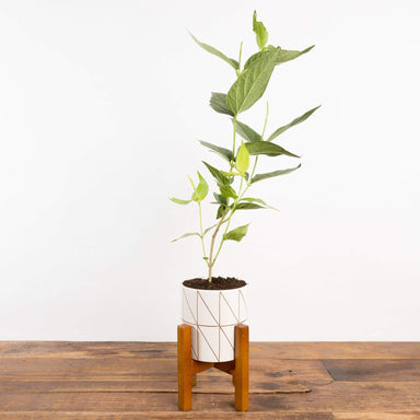 Slender Triangle Cylinder Planter - Urban Sprouts