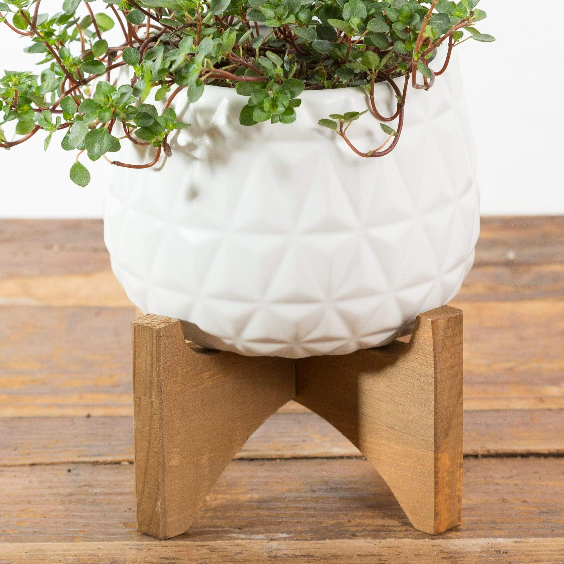 Kaleidoscope Planter - Urban Sprouts