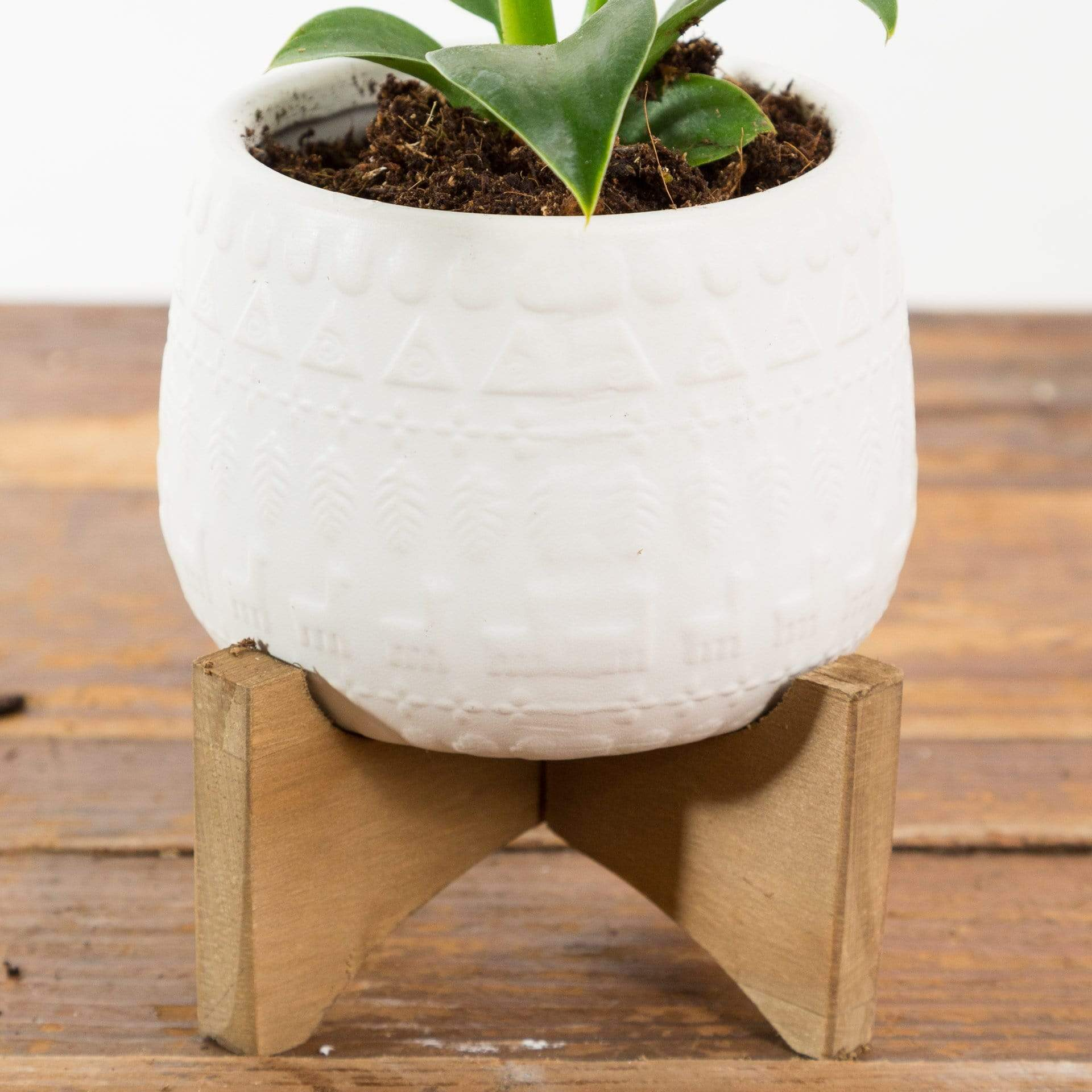 Sweater Planter - Urban Sprouts