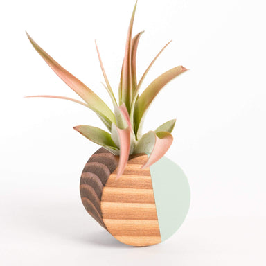 Goodsmith Hanger Air Plant Circle Magnet