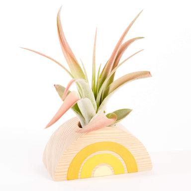 Goodsmith Plant Accessories Rainbow Air Plant Stand