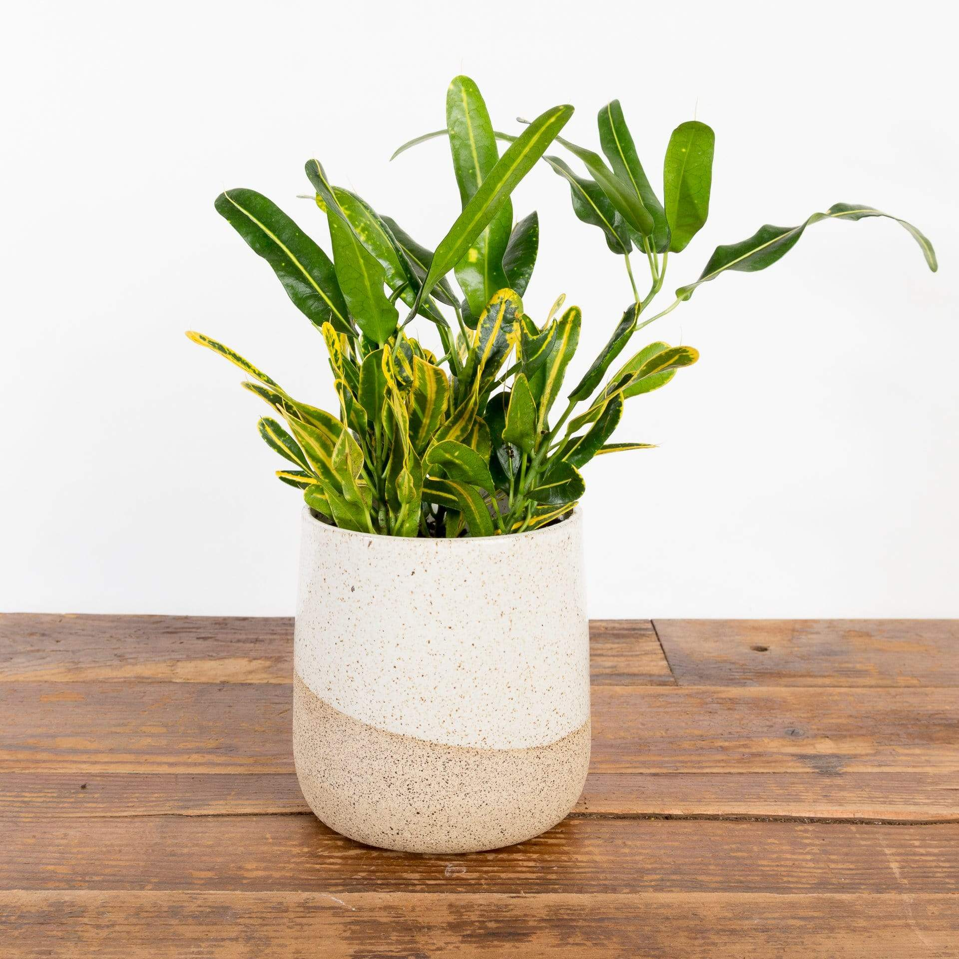 "Speckled Earth Horizon Planter 4.5"" - Urban Sprouts"