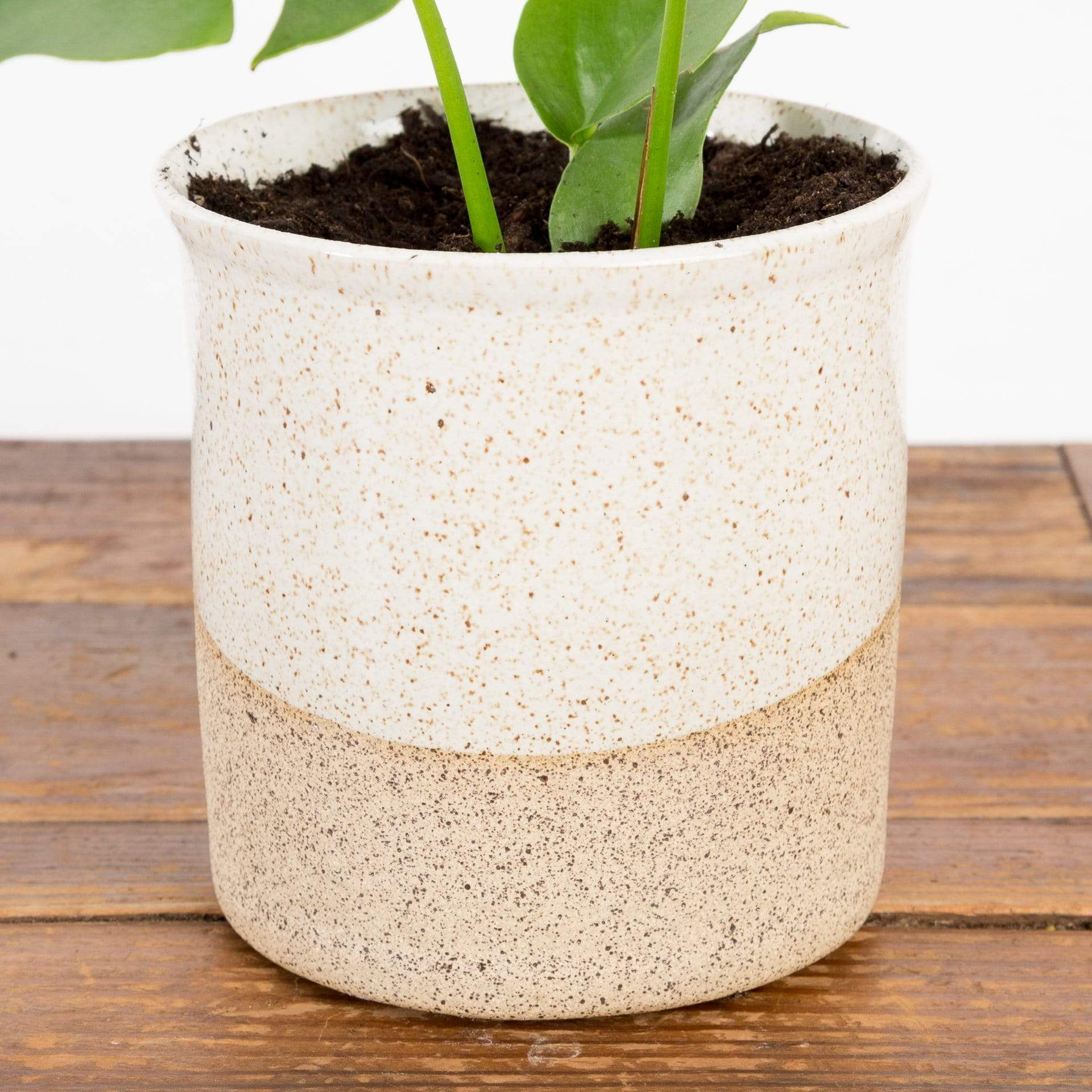 Flared Speckled Stoneware Planter - Urban Sprouts