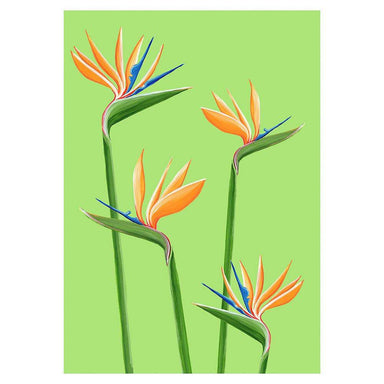 Birds of Paradise Card - Urban Sprouts