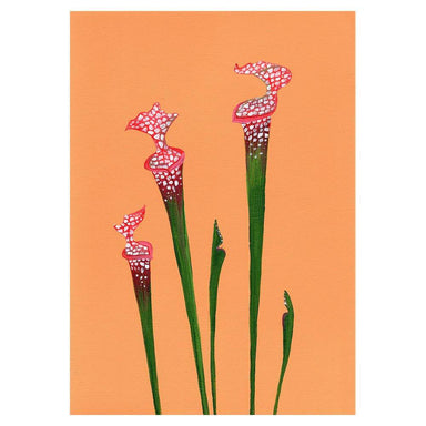 Crimson Pitcher Plant Card - Urban Sprouts