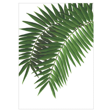 Ferns Card - Urban Sprouts