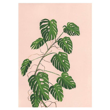 Monstera Deliciosa on Pink Card - Urban Sprouts