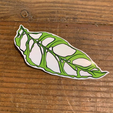 Monstera Obliqua Vinyl Sticker - Urban Sprouts