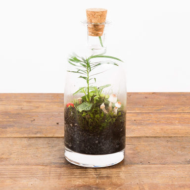"Corked Carafe With Stopper 3.5"" - Urban Sprouts"