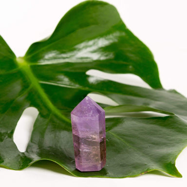 Urban Sprouts Crystal Amethyst - Polished Point