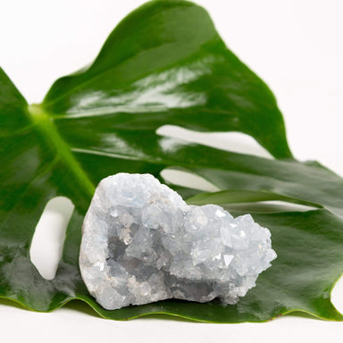 Urban Sprouts Crystal Celestite - Geode Cluster