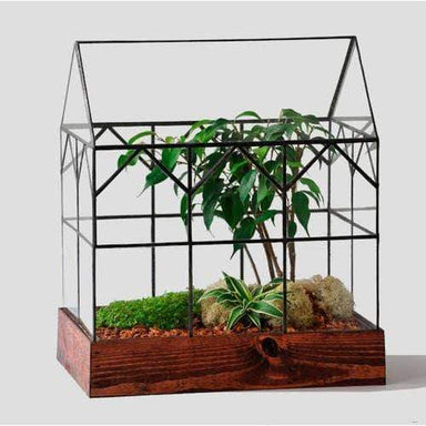 Atrium Terrarium Glass - The Hall - Urban Sprouts
