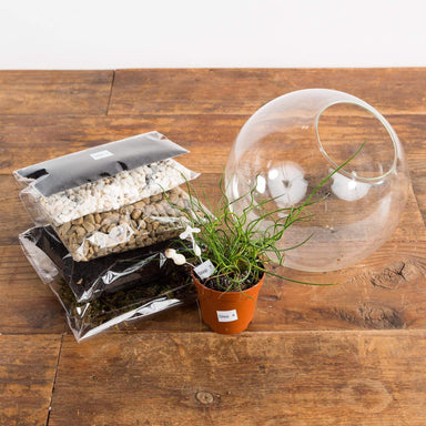 Take Home Succulent Terrarium Kit - Urban Sprouts